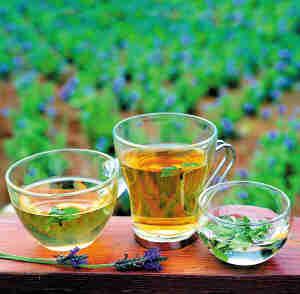 茶怎么区分品种的,具体有什么茶?红茶和绿茶有什么区别,作用上有什么不同